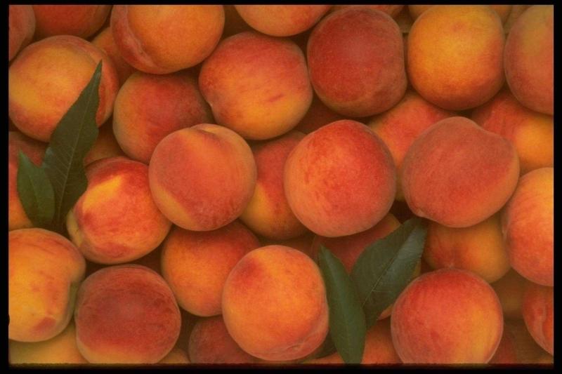 лысые абрикосики фото