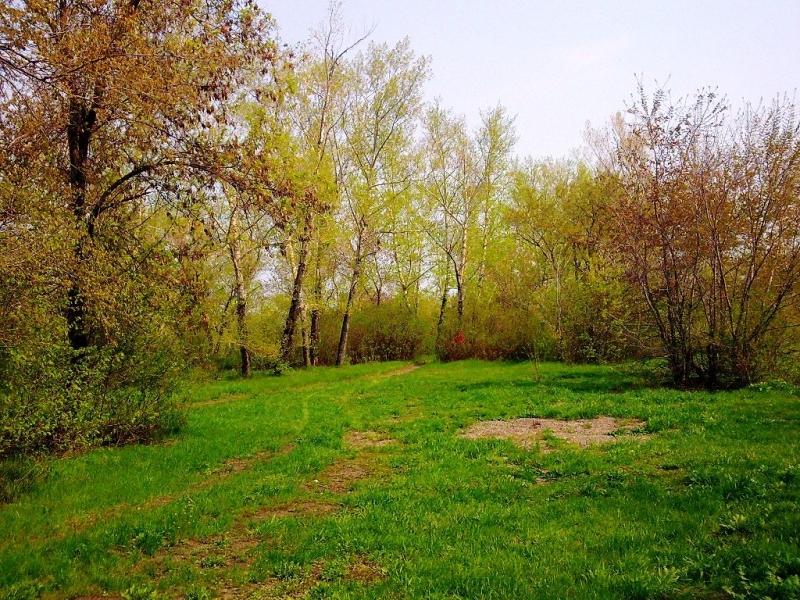 фото парк у реки