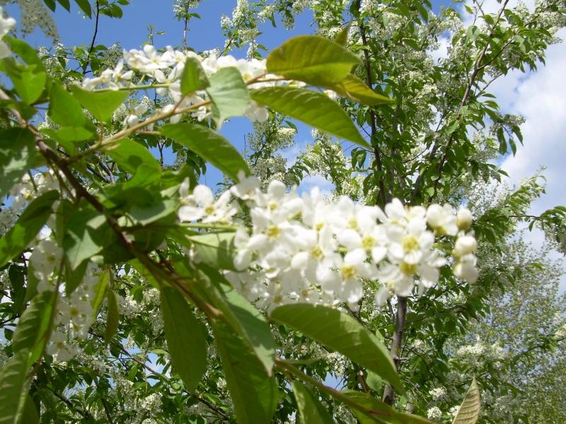 http://photo.sibnet.ru/upload/imgbig/125505532191.jpg