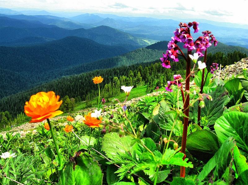 цветы и цветки гора Кубез