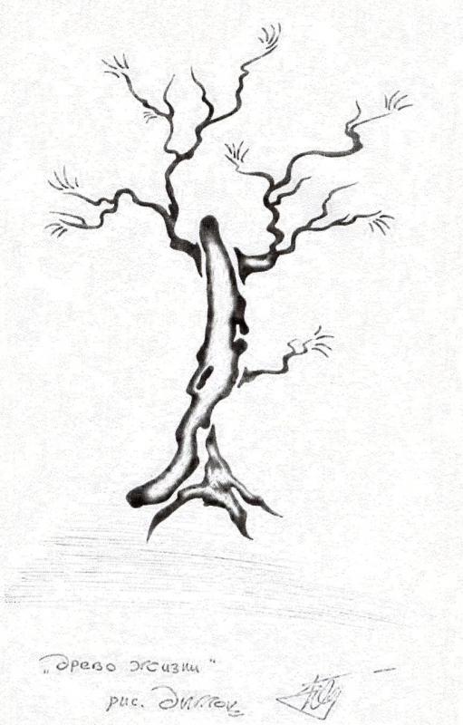 древо жизни фото рисунки