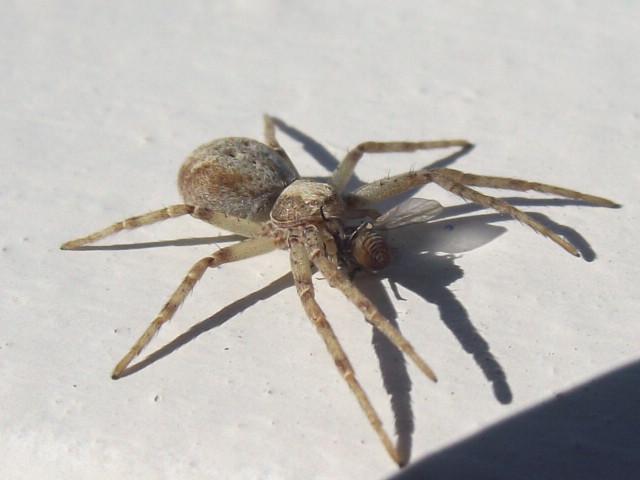 нашем каталоге пауки в красноярском крае чат