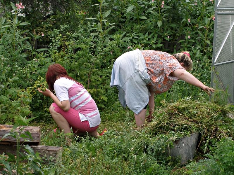 бабы на огороде-оа1