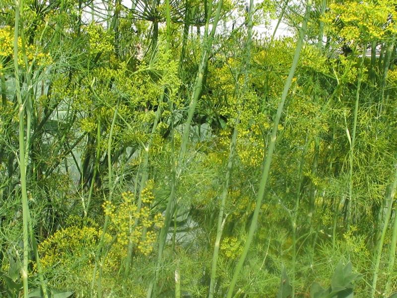 15 комнатных растений, которые очистят от. - УКРОП. org 30