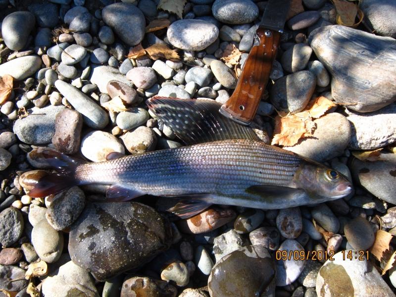 рыбалка в восточной сибири видео хариус