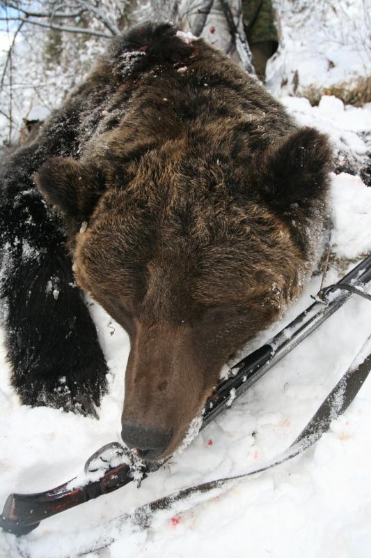 за медведем по тайге охота и рыбалка