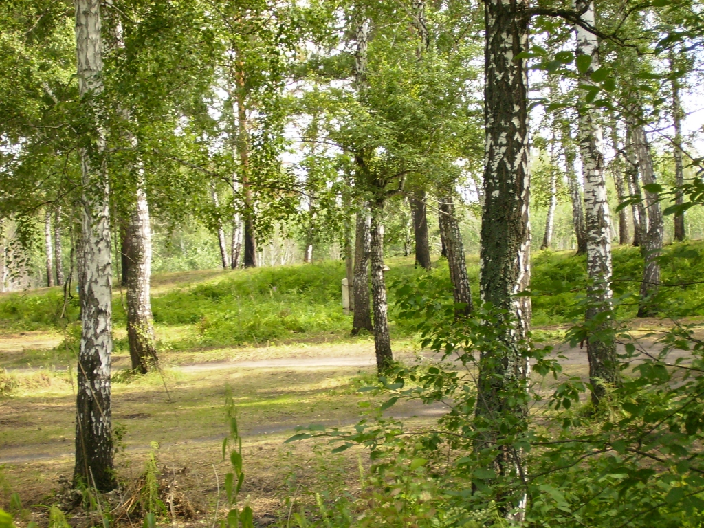 природа новосибирской области весна фото