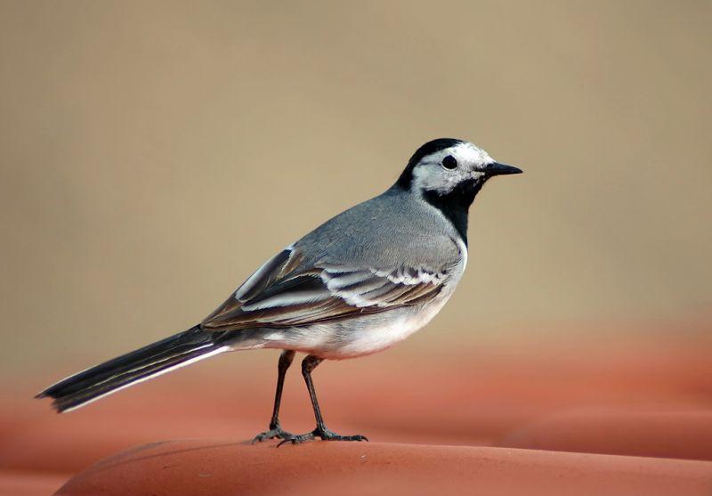 птицы картинки.