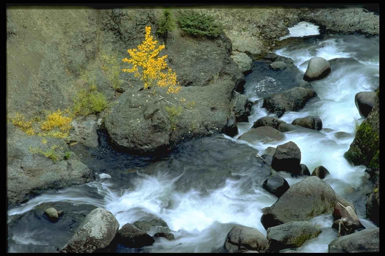 Хто живе в річкі назви і фото і маленька інформація 3 фотография