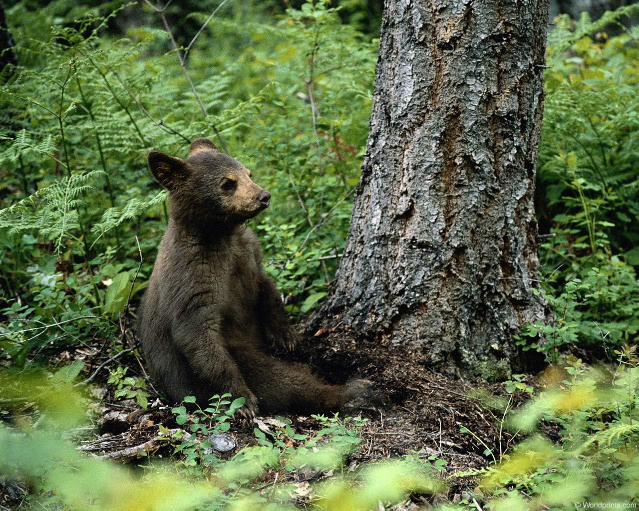 фото медведей.