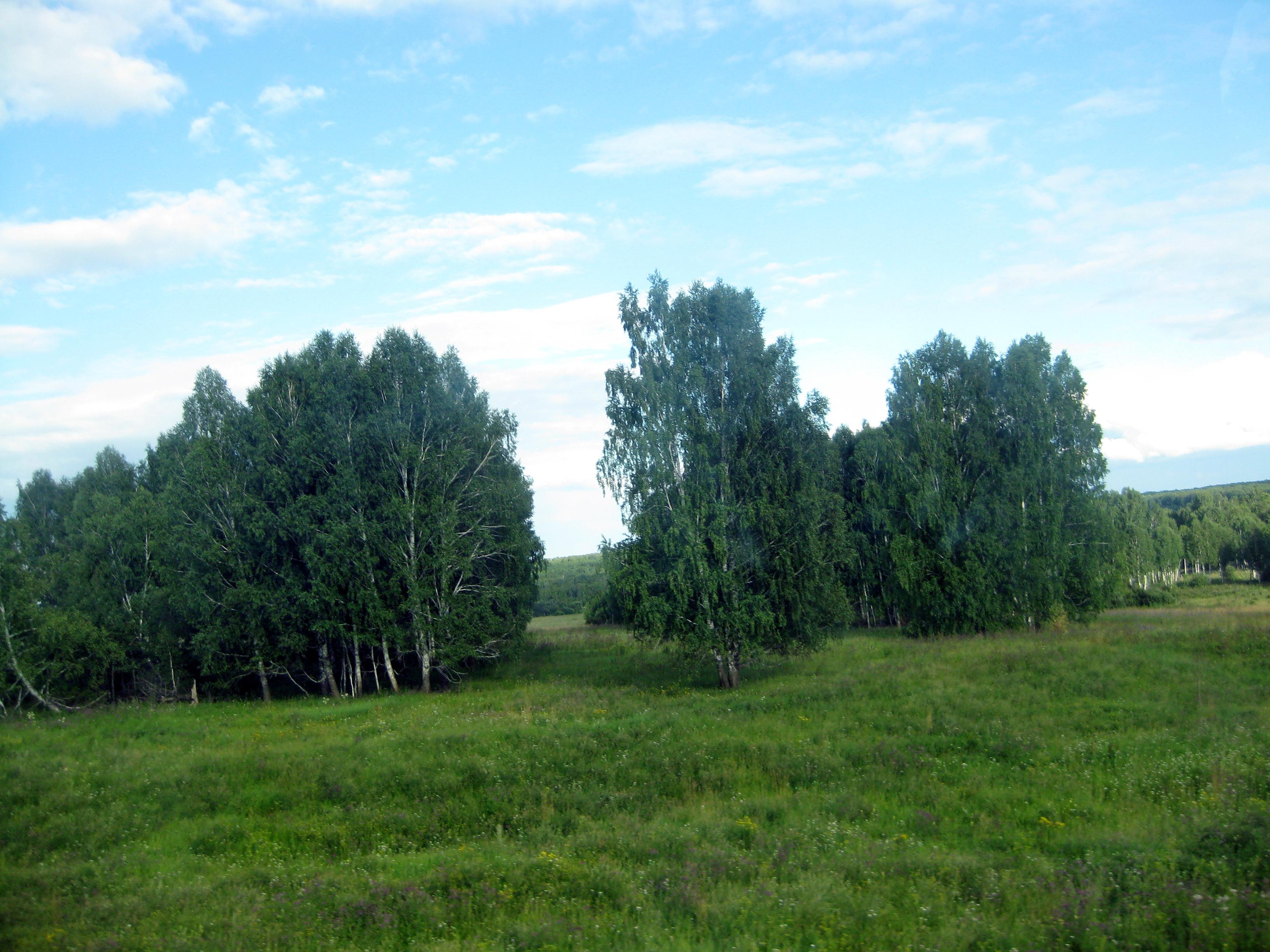 Фото природа западной сибири летом 4