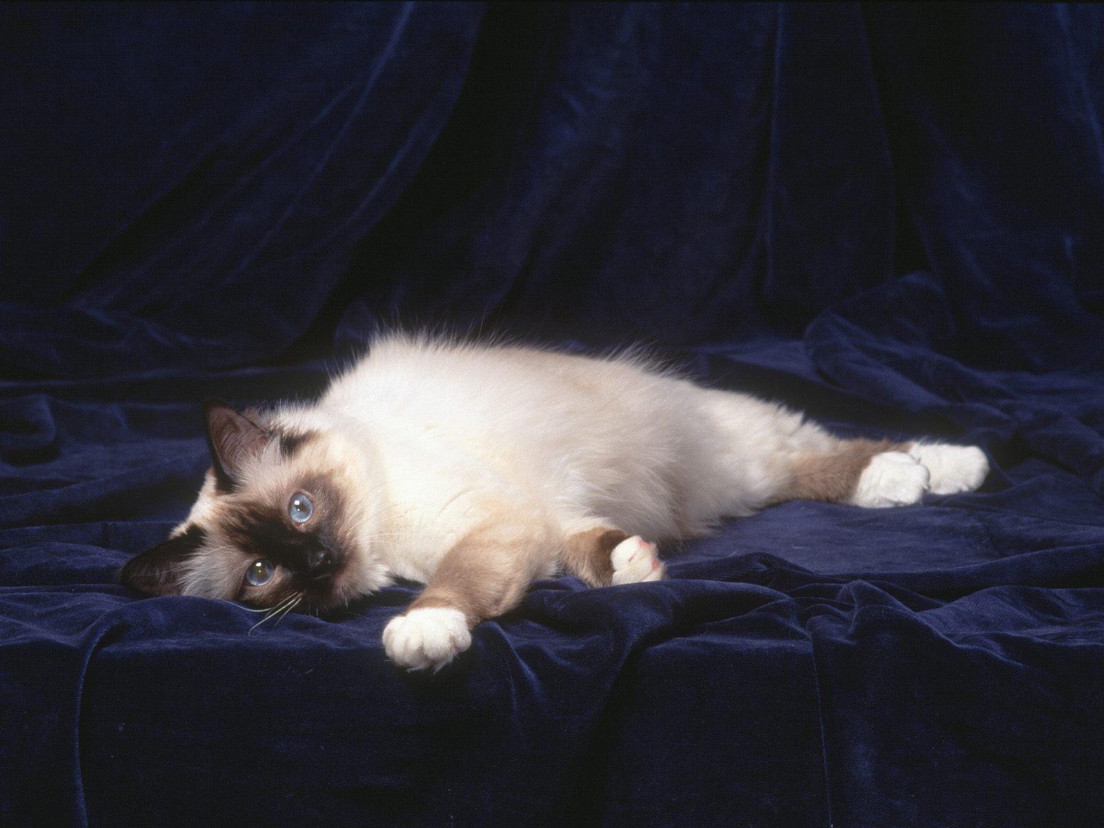 krasivie-foto-kisek
