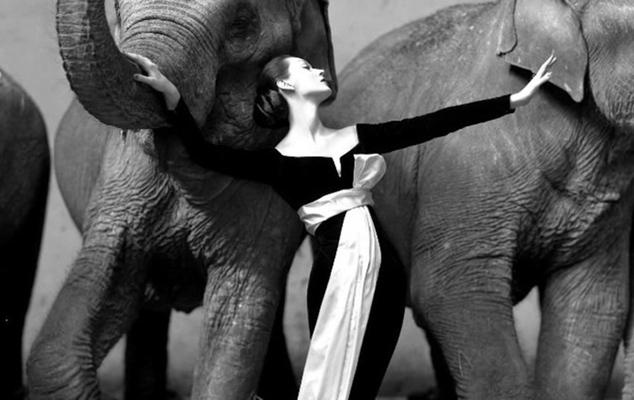 «Довима и слоны» ($1,15 млн)